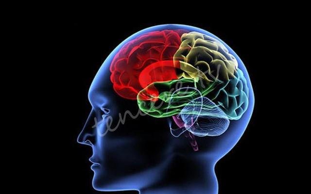 Beyninizi öldüren 11 gıda maddesi tarifi